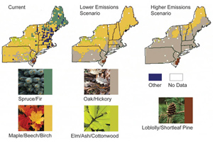 Maps of the Northeast United States that show the distribution of several different types of trees under the current conditions, a lower emissions scenario, and a higher emissions scenario. Under current conditions, there is a wide variety of types of trees in forests across the Northeast. Under the lower emissions scenario, the map becomes predominately Maple, Beech and Birch, with a significant portion of Oak and Hickory. The Spruce and Fir disappear completely from the map. Under the higher emissions scenario, only northern New York, New Hampshire, Vermont and Maine have Maple, Beech, and Birch trees. Oak and Hickory dominate the large majority of the region under the higher emissions scenario. Under both the lower and higher emissions scenario, the map of tree species shows that there will be significantly less diversity than the current conditions.