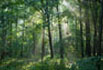 image of shaded forest