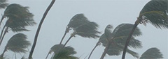 photo of palm trees blowing in hurricane